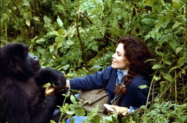 Gorilles dans la brume-avant-scene-cinema-617-kingkong